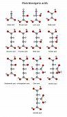 Chemical formulas of bioorganic acids (acetic, pyruvic, lactic, succinic, fumaric, malic, tartaric, oxalic, oxaloacetic, ketoglutaric, citric, isocitric, aconitic) poster