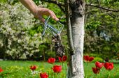 gardener hand and dead mole in iron trap on garden spring background poster
