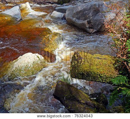West Coast; New Zealand; Karamea; Limestone; Arch; River; Oparara; Basin; High; Tree; Forest; Rock;