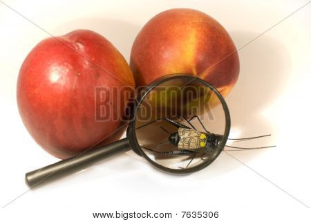 Wash fruit before eating!