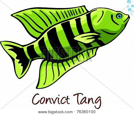 Convict Tang, Color Illustration