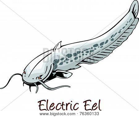 Electric Eel, Color Illustration
