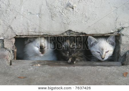 Ghetto Cats
