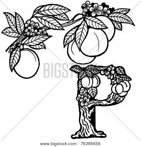 peach branch litera P