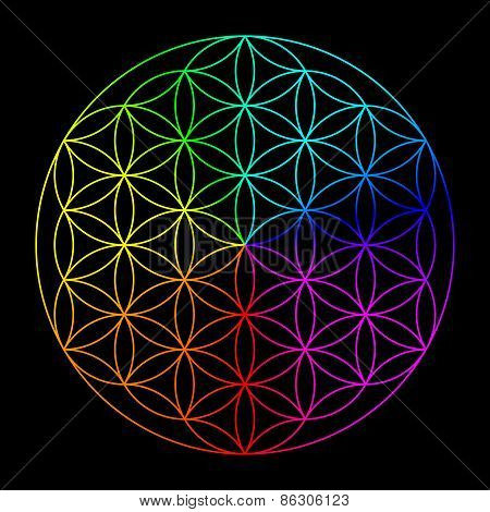 Rainbow flower of life