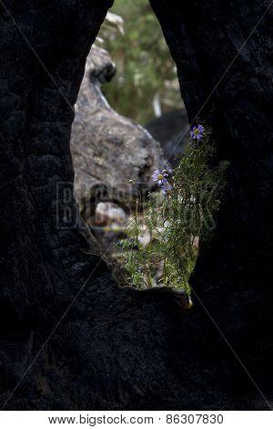 Hole In Tree Trunk Frames Flowers In Australia's Grampians National Park