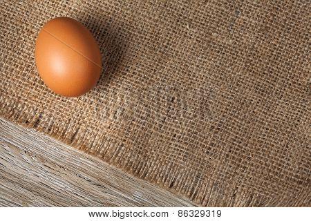 One Fresh Chicken Egg