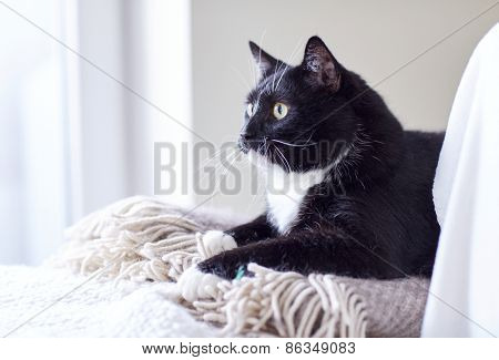 pets, domestic animals and comfort concept - black and white cat lying on plaid at home