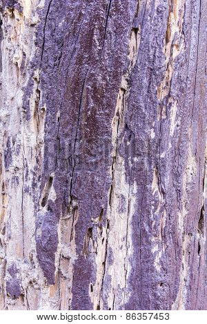 Old Wood Background And Texture