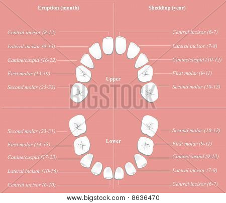 Children dental chart