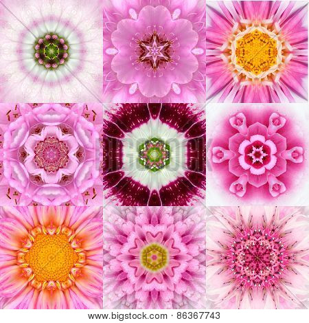 Collection Of Nine Pink Concentric Flower Mandalas Kaleidoscope