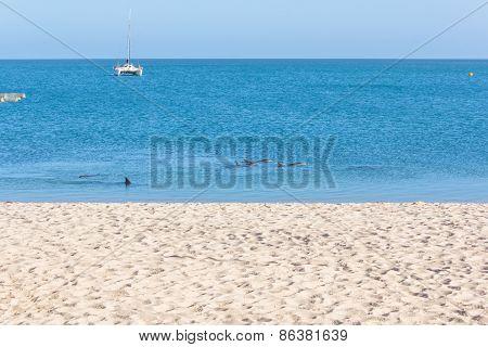 The Dolphins near the Beach