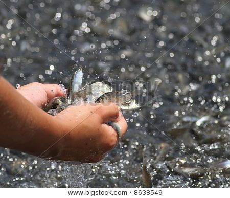 poster of Kid hands full of shiny argent small fishes.