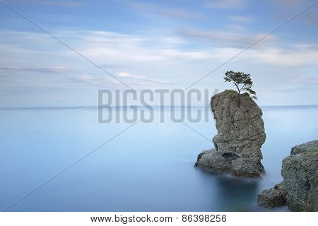 Portofino natural regional park. Lonely pine tree rock and coastal cliff beach. Long exposure photography. Liguria Italy poster