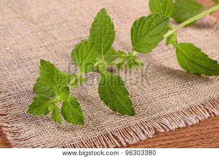 Fresh Healthy Lemon Balm On Wooden Table, Herbalism