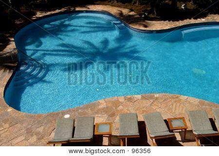 Palm Pool