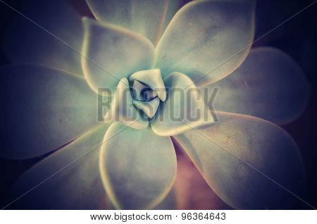 Natural background - dark texture of succulent poster