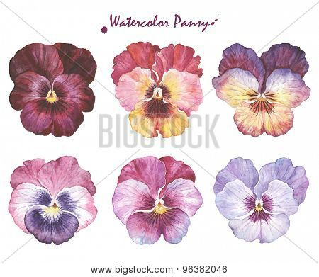 Vector collection of six beautiful watercolor Pansy, hand-drawn illustration for your design.