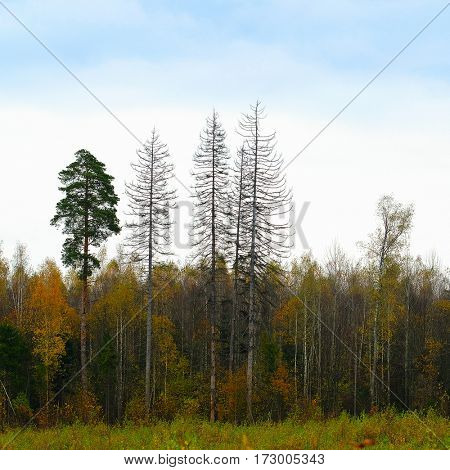 The image of an autumn forest