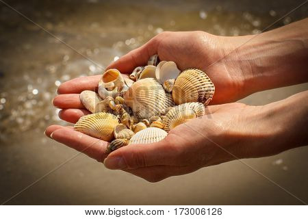 Seashells and scallop in hand of woman at the beach by the sea summer time
