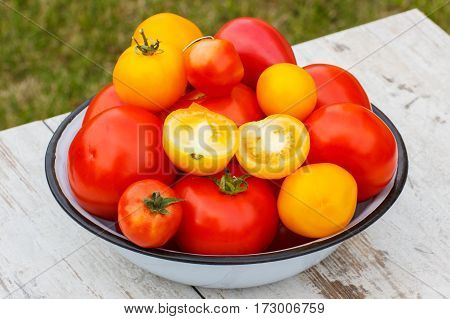 Tomatoes In Metal Bowl In Garden On Sunny Day