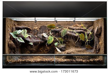 Terrarium to keep tropical jungle animals such as lizards and poison dart frogs. Glass tank with decoration for rain forest  pet animal.