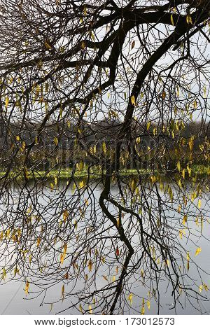 Autumn. Through branches of a willow with rare yellow leaves the river, coast with a grass and wood are visible.