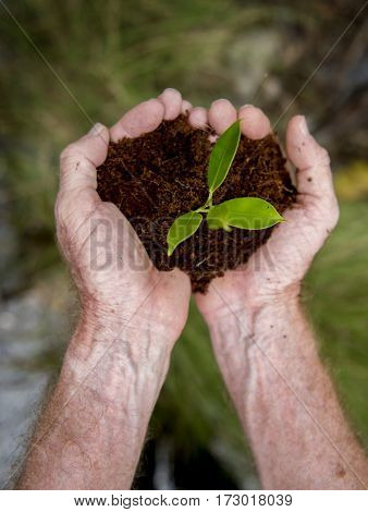 Hands holding soil and plant environment life