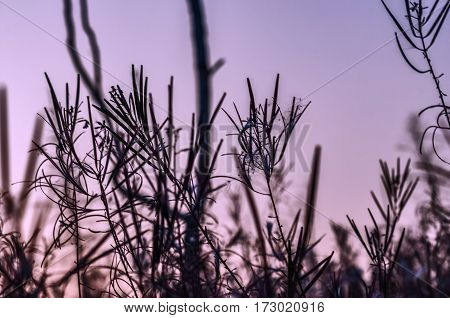 dark silhouettes of plants and trees against the background of the sky at sunset