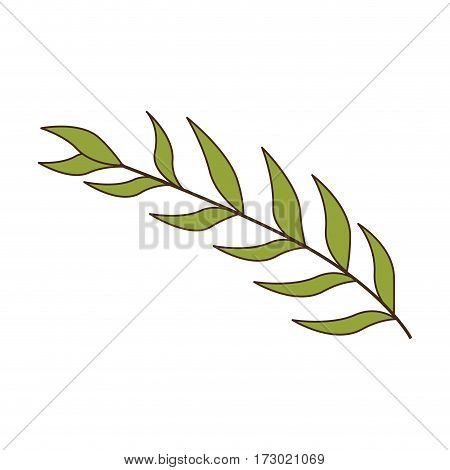 green oval leaves with ramifications vector illustration