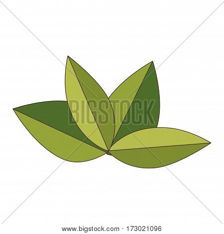 green leaves nature plant icon sketch vector illustration