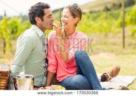 Woman feeding man with grape in vineyard