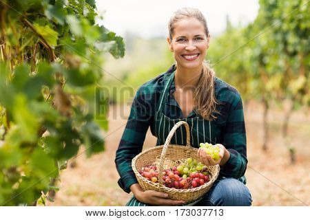 Happy female vintner holding a basket of grapes in the vineyard