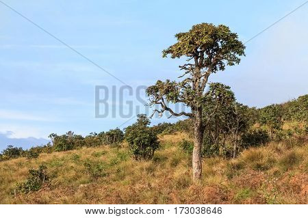 Scenic view of savanna with lonely tree in Horton Plains national park, Sri Lanka