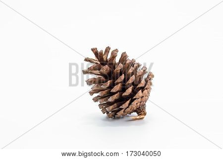 The Single pine cone on white background