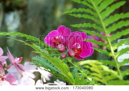 Lilac orchid flower on natural green background