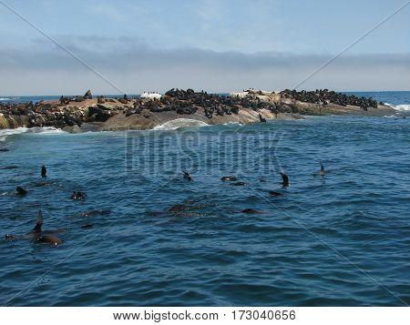 seal island    SEAL ISLAND, CAPE TOWN SOUTH AFRICA 12lpp