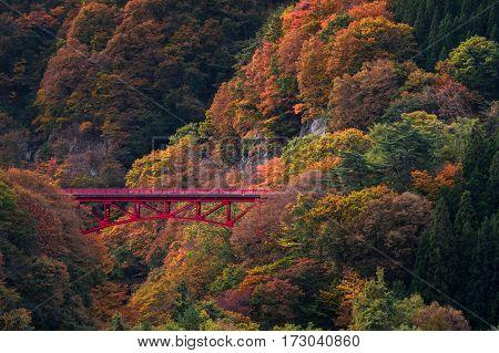 Beautiful Autumn Scene In Takamura Village
