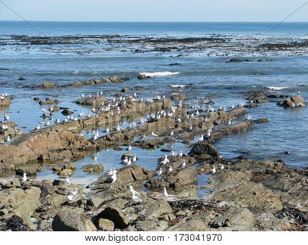 MELKBOS STRAND CAPE TOWN SOUTH AFRICA 14vll