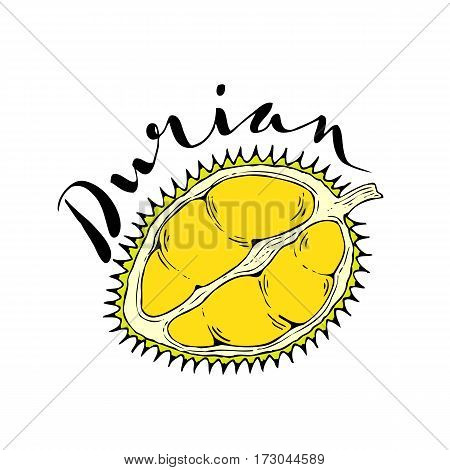 The fruit of durian on a white background with the words Durian. Lettering.