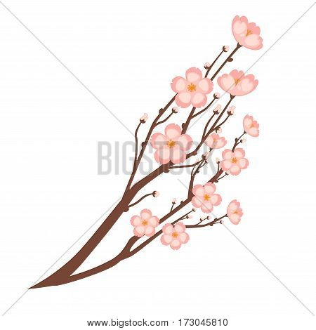 Colorful close up sakura branch isolated on white. Spring symbolic japanese cherry flower growing on small trees. Vector flat illustration of branch with many little blooming pink sakura flowers