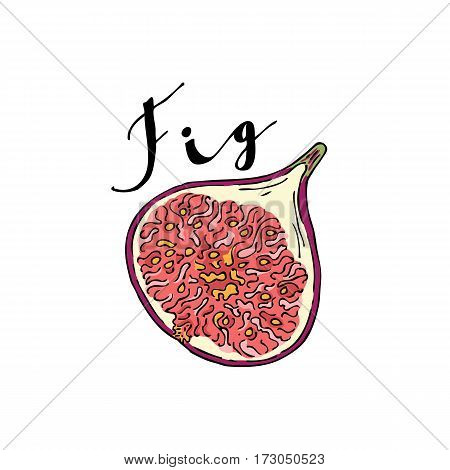 The cut fruit of fig on a white background with the word Fig. Lettering.