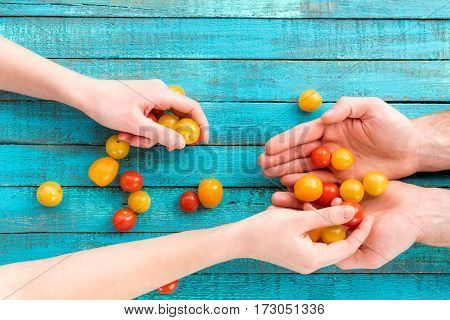 top view of female putting chery-tomatoes in male hands