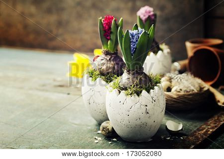 Hyacinth flowers, garden tools and easter eggs on rustic background