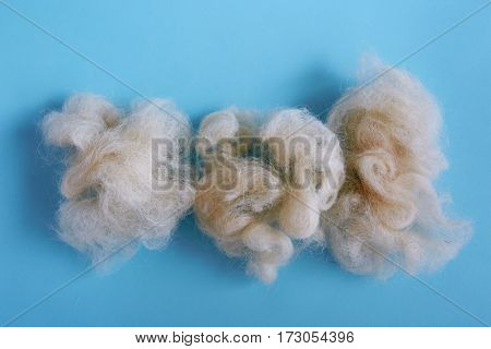 Raw natural wool fiber on blue background.