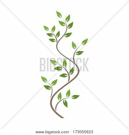 Natural ornamentation with green ivy on white background