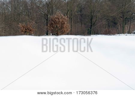 Tree With Brown Leaves In Snowy Rural Landscape.