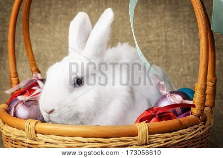 White clean beautiful Easter bunny next to a wicker basket with eggs in the background krashenyymi natural burlap fabric warm beige