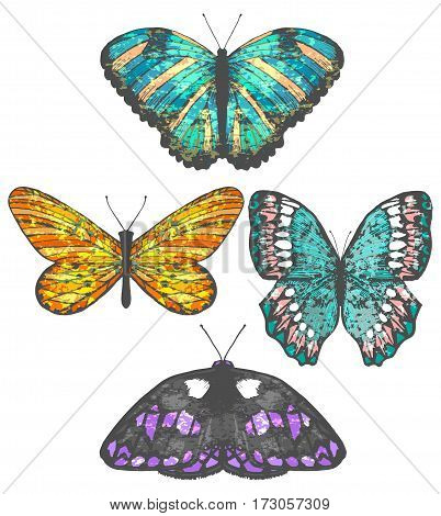 vector colorful set of isolated hand-drawn butterflies