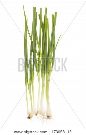 Spring Onions Pile